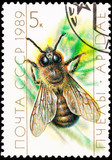 Canceled Soviet Russia Postage Stamp European Honey Bee Drone poster