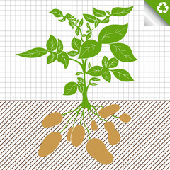 Potato plant vector green bush background