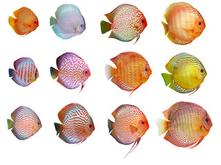 a lot of discus