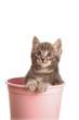 Primo piano di gattino Tigrato