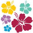 Fototapeten,hibiscus,hibiscus,blume,blume