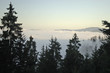 Nebelmeer über dem Schwarzwald