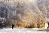 man looking at a beautiful frozen forest, with sun rays