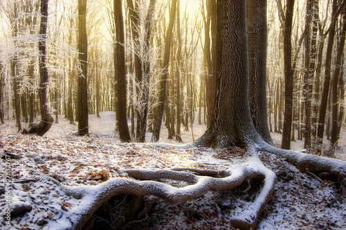 sun rising in a beautiful forest with frozen trees in winter