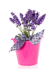 purple lavender in a pink bucket isolated over white