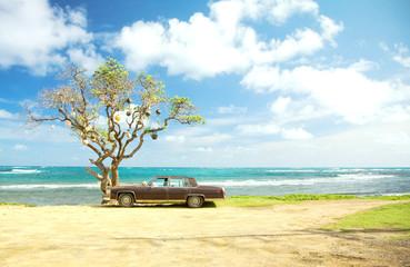 不思議な木と車