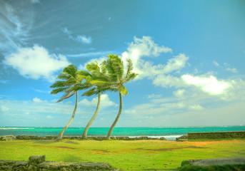 風とヤシの木