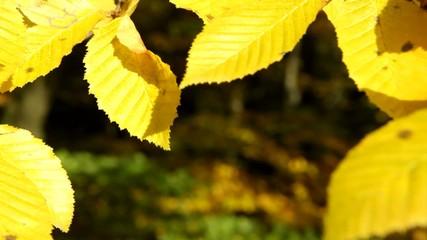 Herbstlaub im Wind