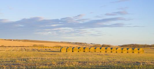 Beautiful golden hay