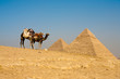 Pyramids Cheops Khafre Camels Waiting