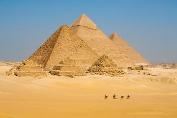 Camels Line Walk Pyramids All