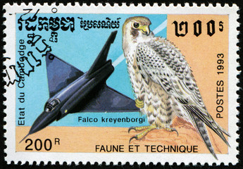 Jet Falcon and bird Falco kreyenborgi