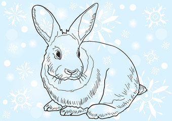 rabbit against blue background with snowflakes