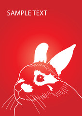 Snout of a rabbit against red background