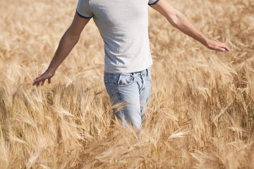 Man walking in wheat fields