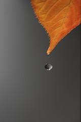 gota de agua cayendo desde un hoja otoñal