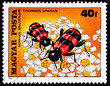 Stamp Bee Beetle Trichodes Apiarius,Yarrow Achillea Millefolium