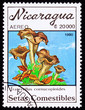 Stamp Black Chanterelle Mushroom, Craterellus Cornucopioides