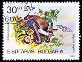 Bulgarian Postage Stamp Greater Mouse-eared Bat Myotis Myotis poster