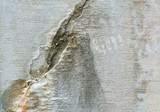 Full Frame Weathered Cracked Beige Cement Wall Mineral Deposits poster