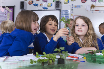 School children looking at plant seedlings on desk