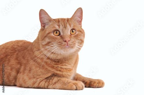 Tuinposter Eekhoorn Attentive brown cat
