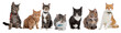 canvas print picture - Group of cats