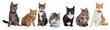 Leinwandbild Motiv Group of cats