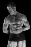 musculature poster