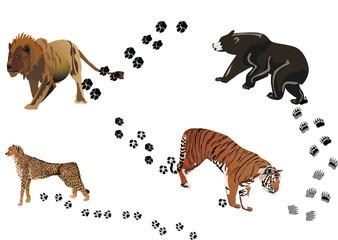 predators and its tracks