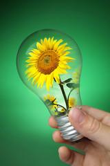 ampoule énergie verte