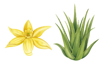 Vanilla Flower and Aloe Vera Plant