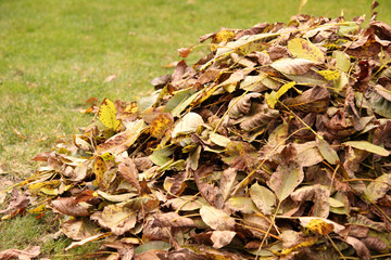 Pile of fallen autumn leaves