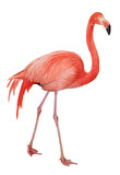 American Flamingo cutout
