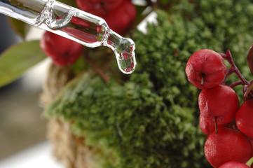 gaultheria procumbens Heilpflanze Tropfen Wintergrünöl