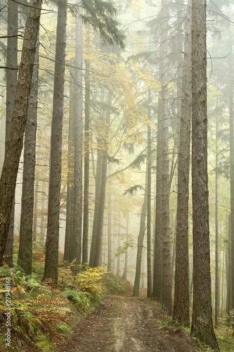 Mountain trail in the misty autumn forest in a nature reserve © joda
