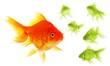 individual goldfish