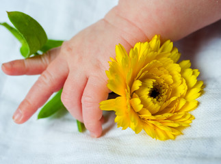 babyhand with flower