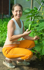 woman picking cucumber