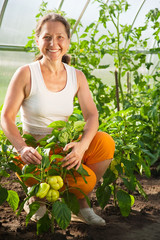 woman is picking of  pepper