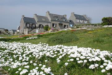 maisons et fleurs à 'ile de batz