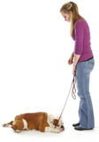 obedience training poster