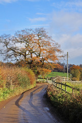 An English country Lane in early Winter