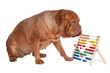 Dog with abacus