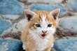 Katzenbaby mit Blauaugen