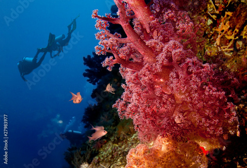 Divers and coral reef - 27983977