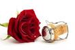 eine nasse rote rose mit einem champagnerkorken