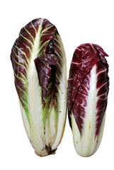 Chicories