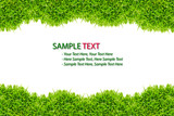 Fototapety grass frame isolated on white background