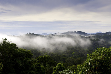 Panama Jungle Vista
